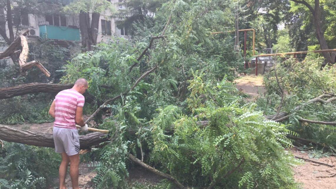 Спил аварийных деревьев на Кирова, 79 и 81